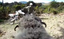 Ram rams motorcycle